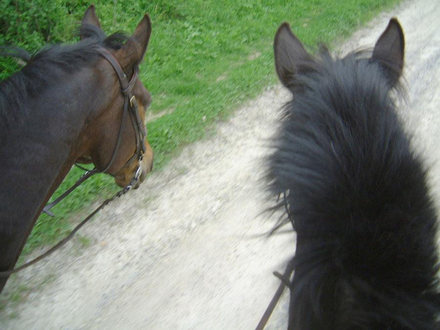 equitation peche en bourgogne